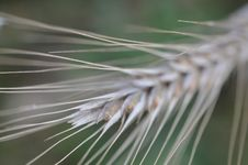 Free Close Up, Grass Family, Grass, Macro Photography Royalty Free Stock Photo - 116069125