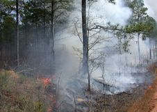 Free Tree, Forest, Wildfire, Smoke Royalty Free Stock Images - 116069159