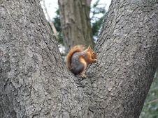 Free Squirrel, Fauna, Mammal, Tree Stock Photos - 116069253