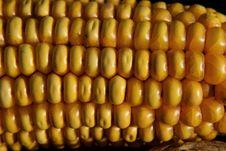 Free Corn Kernels, Sweet Corn, Corn On The Cob, Vegetarian Food Stock Photography - 116069382