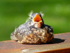Free Fauna, Bird, Beak, Old World Flycatcher Royalty Free Stock Photos - 116069578