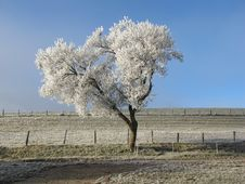 Free Tree, Sky, Frost, Winter Stock Photography - 116069662