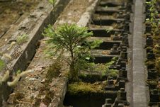 Free Water, Plant, Tree, Moss Royalty Free Stock Photography - 116069667
