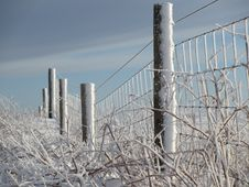 Free Wire Fencing, Winter, Frost, Snow Stock Photo - 116069680
