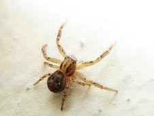 Free Spider, Arachnid, Invertebrate, Arthropod Stock Images - 116069754