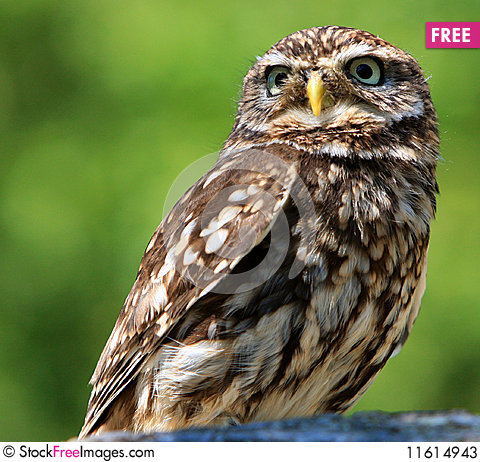 owl free stock images amp photos 11614943