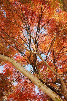 Free Autumn Tree In Park Stock Image - 11613871