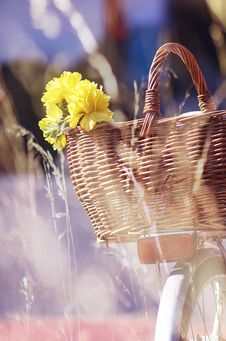 Free Brown Wicker Basket And Yellow Flowers Royalty Free Stock Photography - 116147227