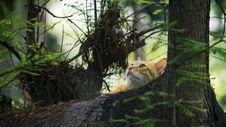 Free Yellow Kitten On Brown Trees Stock Image - 116147261