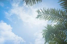 Free Low Angle Photo Of Palm Leaves Royalty Free Stock Image - 116147306