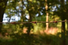 Free Shallow Photography Of Barbwire Royalty Free Stock Image - 116147346