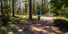 Free Woman Wearing Black Backpack Walking On The Forest With Her Dog Stock Photography - 116147352