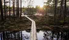 Free Photo Of Boardwalk Between Forest Trees Royalty Free Stock Image - 116147356