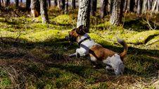 Free Medium Short-coated Tan And White Dog Stock Photo - 116147360