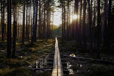 Free River Between Trees And A Sunset Stock Image - 116147361