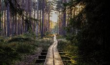Free Empty Wooden Pathway In Forest Royalty Free Stock Images - 116147439