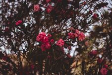 Free Red Clustered Flowers Stock Images - 116147464