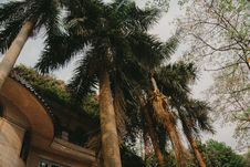 Free Palm Trees Under Gray Skies Stock Images - 116147494