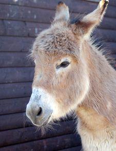 Free Donkey, Fauna, Horse Like Mammal, Snout Stock Photo - 116175430