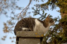 Free Fauna, Mammal, Tree, Cat Royalty Free Stock Image - 116175736