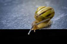 Free Snails And Slugs, Snail, Molluscs, Invertebrate Stock Photo - 116176230