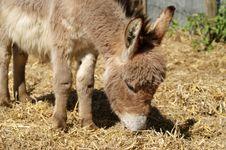 Free Donkey, Horse Like Mammal, Fauna, Livestock Royalty Free Stock Images - 116176309