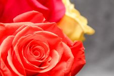 Free Flower, Rose, Red, Rose Family Royalty Free Stock Photos - 116176648