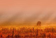 Free Ecosystem, Sky, Grassland, Savanna Stock Photos - 116176713