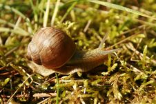 Free Snails And Slugs, Snail, Molluscs, Terrestrial Animal Stock Images - 116176784