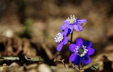 Free Selective Focus Photography Of Purple Petaled Flowers Royalty Free Stock Image - 116232036
