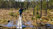 Free People Walking In Brown Wooden Planks In Forest Royalty Free Stock Photography - 116232037
