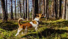 Free Medium Short-coated Tan And White Dog On Focus Photo Royalty Free Stock Images - 116232039