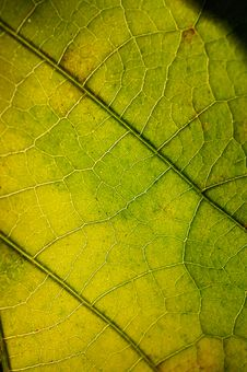 Free Close Up Photography Of Leaf Royalty Free Stock Images - 116232329
