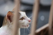Free White And Gray Tabby Cat Behind Fence Stock Image - 116232331