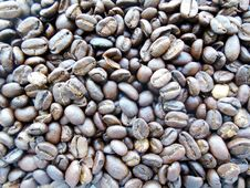 Free Pebble, Rock, Cocoa Bean, Bean Royalty Free Stock Images - 116266919