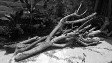 Free Tree, Black And White, Branch, Woody Plant Stock Photo - 116266940