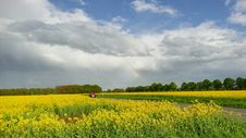 Free Grassland, Field, Sky, Rapeseed Stock Photo - 116267120