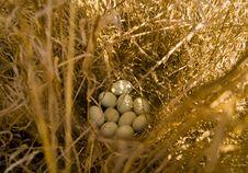 Free Fauna, Bird Nest, Nest, Grass Family Royalty Free Stock Photography - 116267307