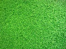 Free Green, Grass, Lawn, Grass Family Stock Photos - 116267423