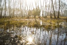 Free Reflection, Swamp, Water, Wetland Royalty Free Stock Images - 116267619