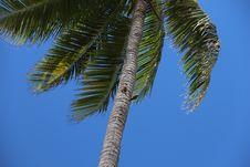 Free Sky, Tree, Palm Tree, Arecales Royalty Free Stock Photography - 116267807
