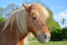 Free Horse, Mane, Pasture, Horse Like Mammal Stock Photo - 116268070