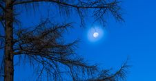 Free Sky, Branch, Tree, Moon Royalty Free Stock Images - 116268369