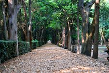 Free Tree, Path, Plant, Leaf Stock Photos - 116268583