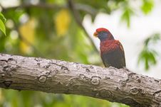 Free Bird, Beak, Fauna, Organism Royalty Free Stock Image - 116330446