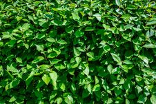 Free Plant, Leaf, Grass, Shrub Royalty Free Stock Photo - 116330985