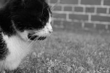 Free Cat, White, Black, Black And White Royalty Free Stock Photo - 116331135