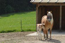 Free Horse, Horse Like Mammal, Mare, Pasture Stock Image - 116331181