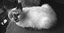 Free Cat, Black And White, Black, Whiskers Royalty Free Stock Photo - 116331395