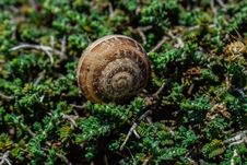 Free Snail, Snails And Slugs, Molluscs, Terrestrial Animal Stock Images - 116331634